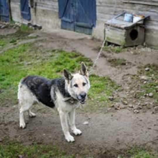 Come i cani aiutano a mantenere i quartieri multirazziali socialmente separati