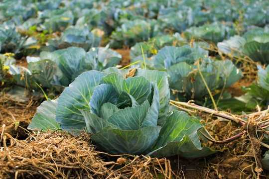 Seperti Apa Pola Makan Sehat Bagi Saya dan Planet?