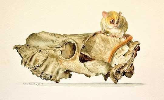 ¿Qué mató a los gigantes de Madagascar hace mil años?