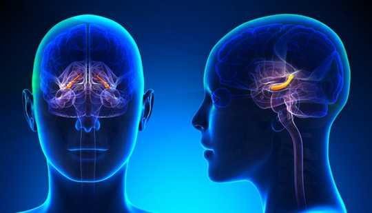 Wie Erinnerungen vom Gehirn geformt und abgerufen werden