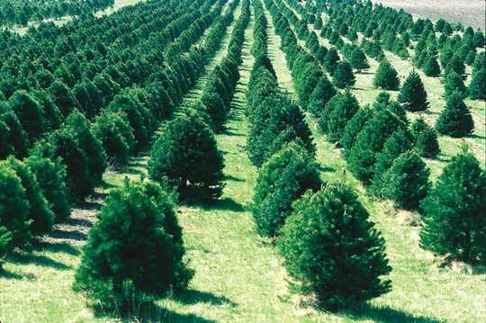 5 Ways To Make Your Christmas More Sustainable