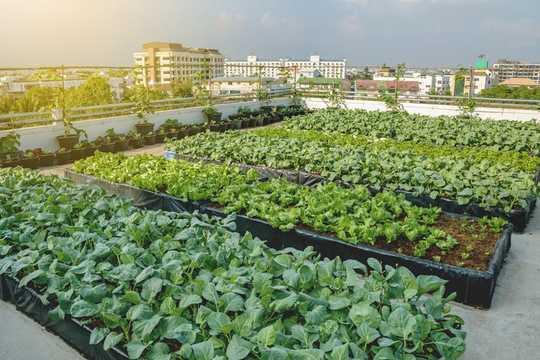 8如何制止全球糧食危機