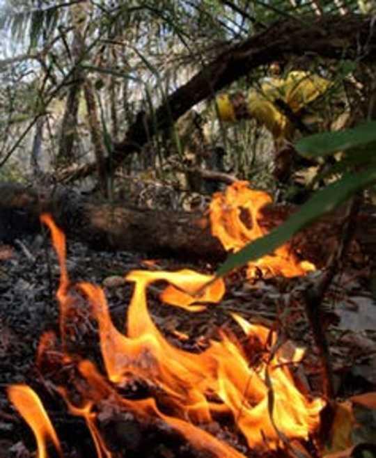 این فقط جنگل های بارانی آمازون در آمازون نیست که آتش بس - آتش سوزی بولیوی تهدید کننده مردم و حیات وحش است