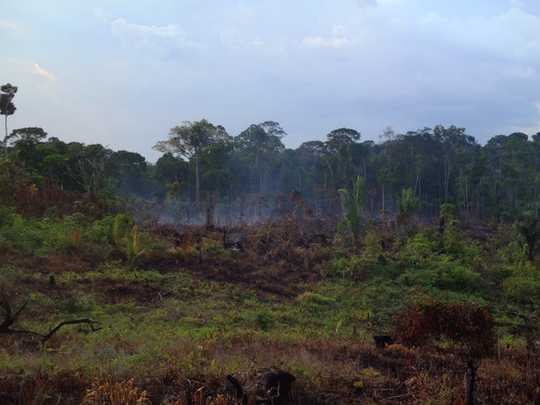 How Fires Weaken Amazon Rainforests' Ability To Bounce Back