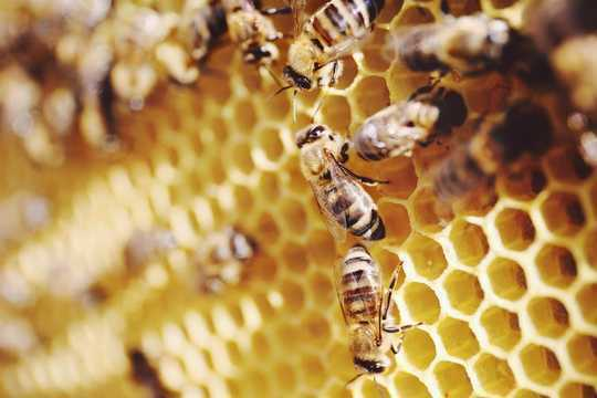 New Research Shows Bees Can Add And Subtract