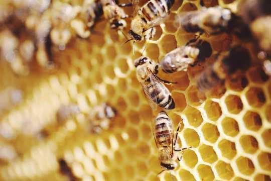 Neue Forschung zeigt, dass Bienen hinzufügen und abziehen können