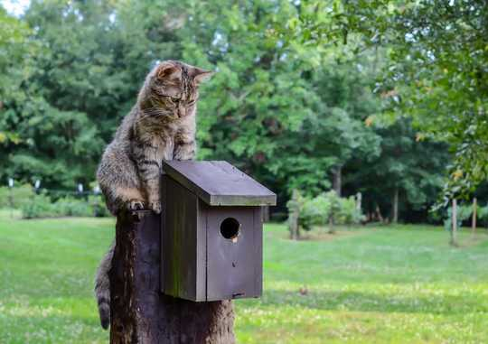 Al mantener a los gatos en el interior, cómo asegurarse de que su mascota esté feliz