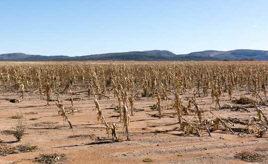 8 maniere om 'n wêreldwye voedselkrisis te stop