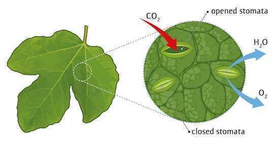 气候变化:拥有树木个性的正确组合可以使森林更具弹性