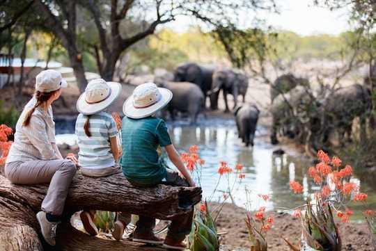 为什么在野生动物之旅中需要保持低调