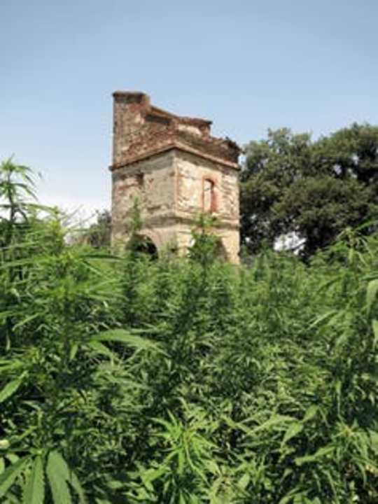 Perancis Lupa Keistimewaan Golden Age Of Marijuana Perubatan?