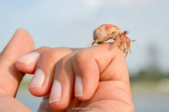 Hermit Crabs May Offer Insights Into Wealth Inequality