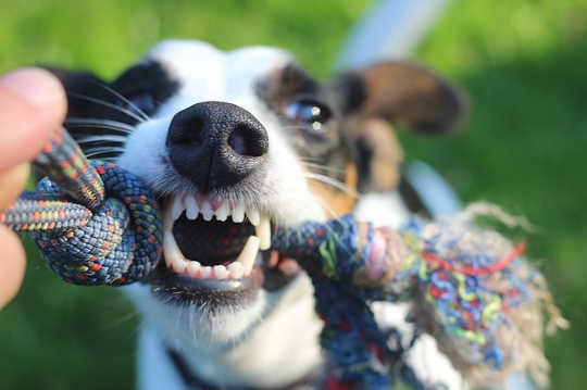 Bạn không phải là một con chó già: Chuyển từ không gian đầu sang không gian trái tim