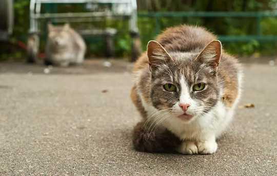 Warum wir Katzen nicht beschuldigen sollten, wild lebende Tiere zerstört zu haben