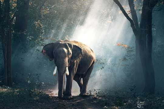 방에있는 코끼리 : 당신은 그를 무시할 수는 있지만 여전히 거기 있습니다
