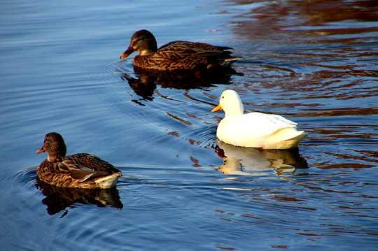 Bagaimana Kami Membuat Dualitas dan Pemisahan ... Dan Apa Yang Perlu Dilakukan Mengenai Ini