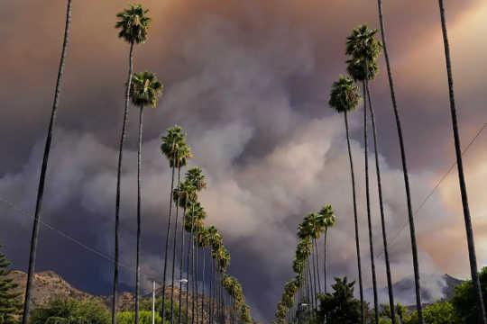 La fumée des feux de forêt se déverse sur les palmiers bordant une rue d'Azusa, en Californie, le 13 août 2020 (que contient cette fumée de feu de forêt qui est si mauvaise pour vos poumons)