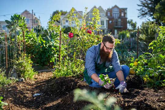 4 أسباب لا بد أن تزدهر الزراعة الحضرية في مرحلة ما بعد الجائحة