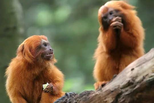 آیا حیوانات گزنده خوار هستند زیرا والدین به آنها آموزش می دهند چه غذایی برای خوردن بی خطر است؟