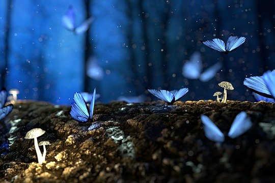 La segunda mitad de la vida: confusión y caos o transformación y metamorfosis