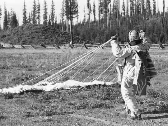A smokejumper gathers his parachute after landing in Seeley Lake, Montana, around 1940.