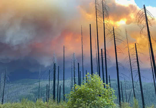 How Both Climate Change and Forest Management Have Fueled Today's Epic Western Wildfires