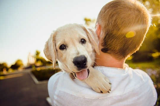 Dogs Never Lie About Love and Happiness