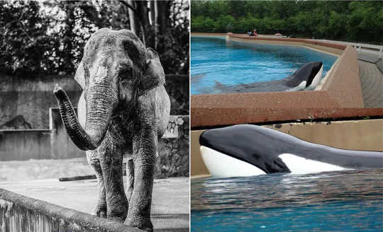 چگونه نگهداری پستانداران بزرگ در باغ وحش ها و آکواریوم ها به مغز آنها آسیب می رساند