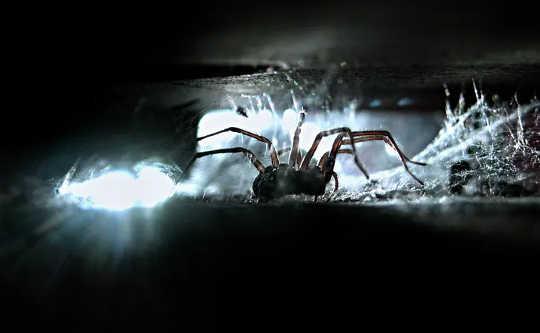Tại sao phương tiện truyền thông có thể đổ lỗi cho chứng sợ Arachnophobia của bạn
