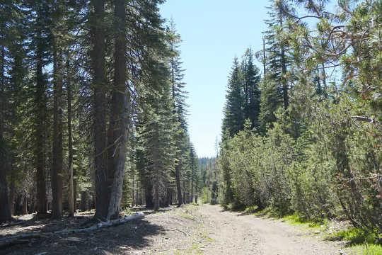Foresta trattata (a sinistra) e foresta non trattata (a destra), Sierra Nevada centrale. Notare la prevalenza di piccoli alberi e una maggiore densità di fusti a destra e le aperture tra gli alberi a sinistra.
