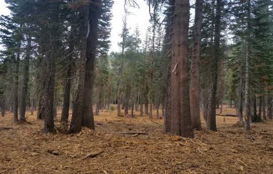 Restoring California's Forests To Reduce Wildfire Risks Will Take Time, Billions of Dollars and Broad Commitment