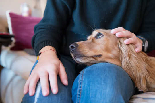 El perro promedio pasa mucho tiempo mirando a su dueño, creando un 'bucle de amor'. (la nariz de tu perro no conoce límites y tampoco su amor por ti)