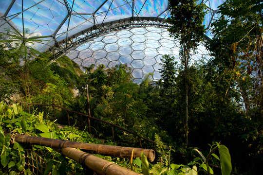 Tropisk vegetation inne i Eden Project-kupolen. (en läroplan för klimatförändringar för att ge klimatstrejkgenerering)