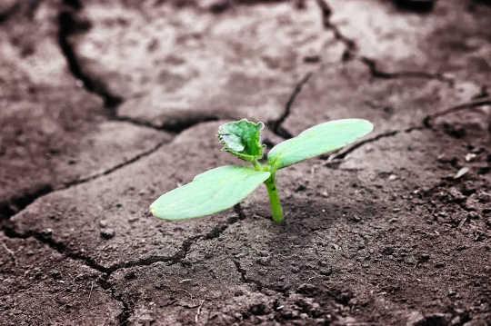5 sätt att starta en grön återhämtning