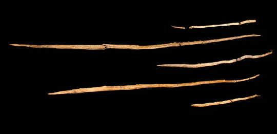 尼安德特人标枪,300,000年前,德国舍宁根。 (尼安德特人时代的战争,我们的物种如何争取至高无上的地位超过100000年)