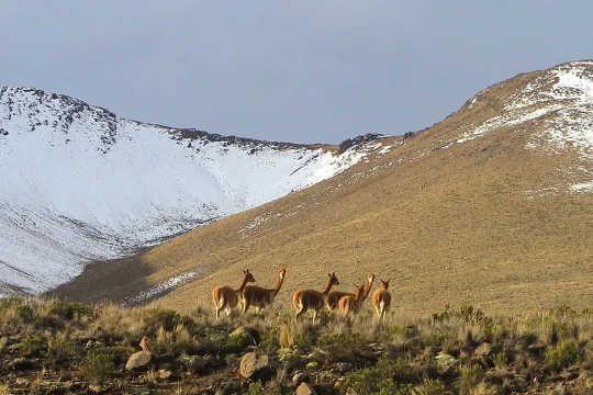 And Dağları.