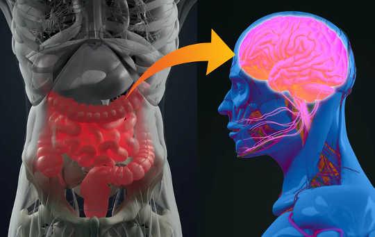 Bagaimana Mikrobioma Usus Anda Berkaitan Dengan Demensia, Penyakit Parkinson dan MS