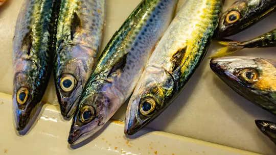 Рыбий жир может защитить сердце. (люди едят недостаточно рыбы и упускают значительную пользу для здоровья)