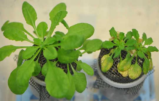 عندما لا تكون النباتات وميكروباتها متزامنة ، يمكن أن تكون النتائج كارثية