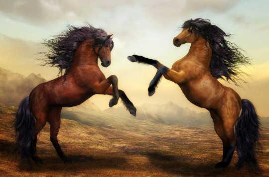 Konu At Değil: At Bir Aynadır