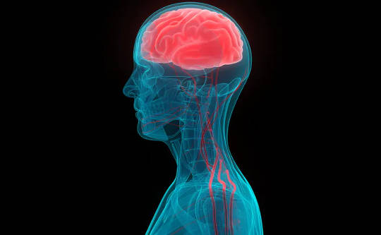 Senaman yang kerap membantu saluran darah tumbuh di otak. (tiga cara aktiviti fizikal mengubah struktur otak)
