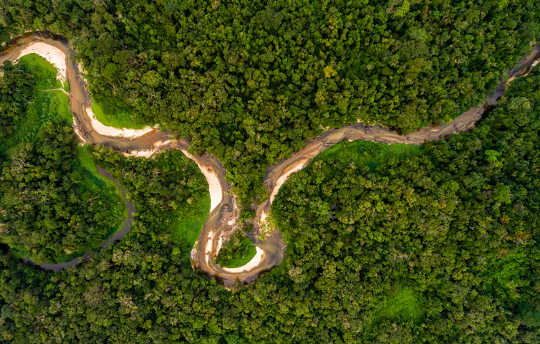 アマゾンの熱帯雨林を伐採したらどうなるでしょうか?