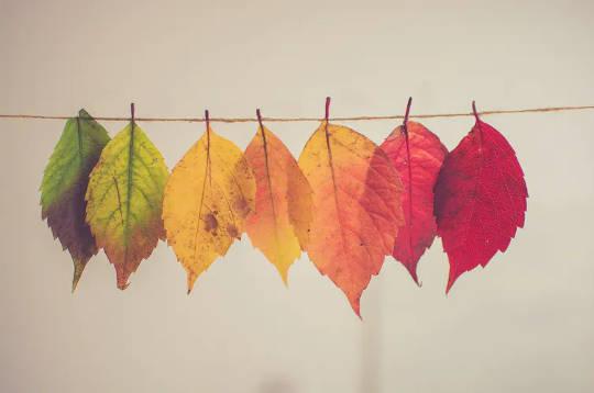 Miksi ilmastonmuutos saa syksyn lehdet muuttamaan väriä aikaisemmin?