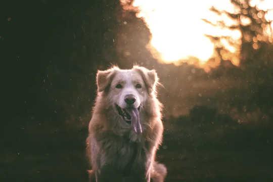 Honden hebben een geweldig reukvermogen en houden van zoete dingen.