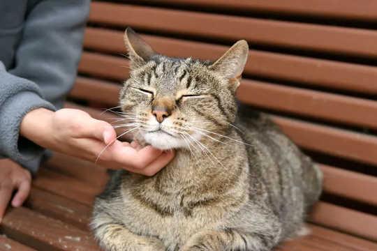 Kedinizin Mutlu Olduğunu Ve Senden Hoşlandığını Nasıl Anlarsınız?
