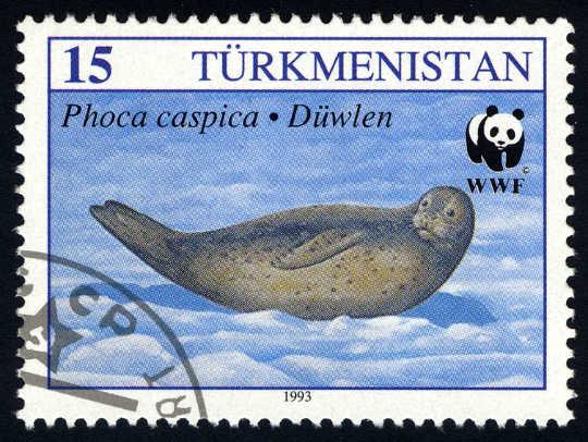Offiziell als gefährdet eingestuft, sind die Zahlen der kaspischen Robben im letzten Jahrhundert um mehr als 90% zurückgegangen.