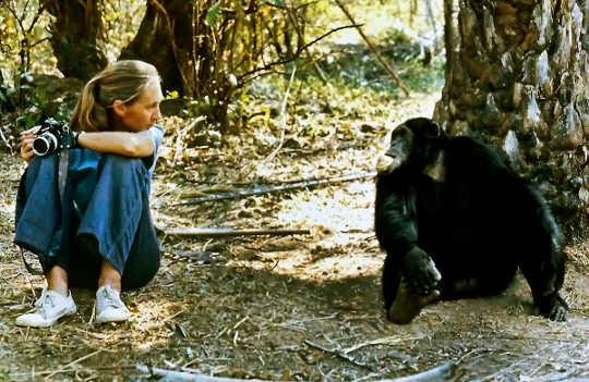제인 구달과의 대화 : 채식, 동물 복지, 어린이 옹호의 힘