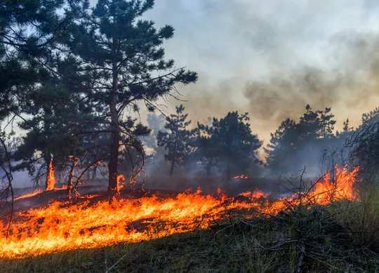 O fogo queima o sub-bosque de uma floresta boreal.