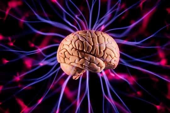 Come i cervelli sono più complessi di quanto suggerisce l'anatomia