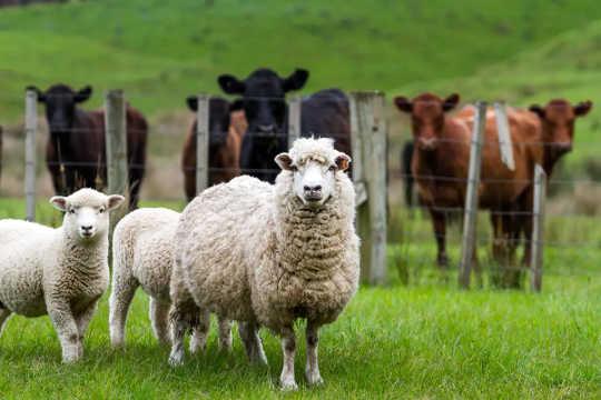 ماذا لو أخذنا جميع حيوانات المزرعة خارج الأرض والمحاصيل والأشجار المزروعة بدلاً من ذلك؟